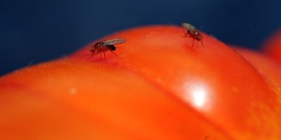 Freo residents unite to stop fruit fly pest