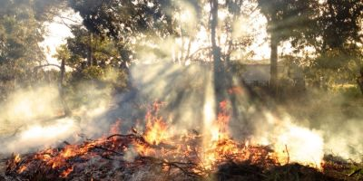 How invasive plants use fire to overtake natives