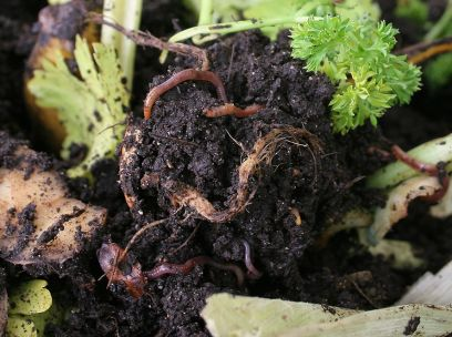 Getting cosy with your compost