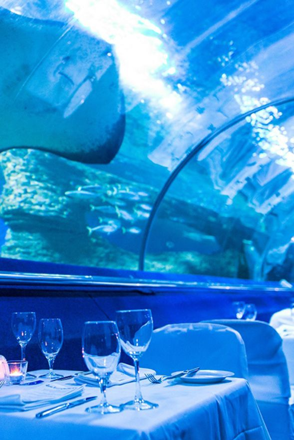 AQWA Dine Beneath the Sea