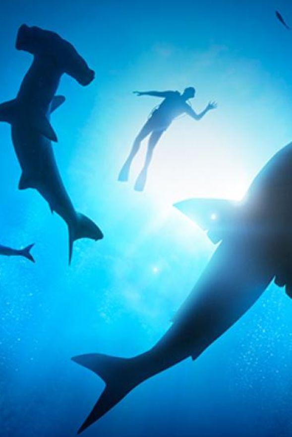 Planet Shark: Predator or Prey Exhibition