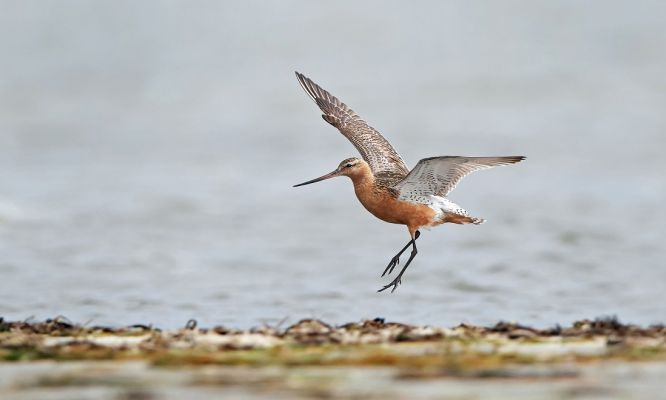 The Wonder of Avian Migration