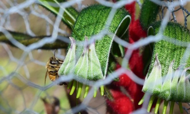 Birds beat the bees to prove that bigger is better