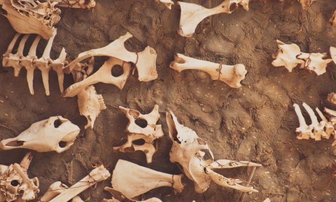 How Can an Archaeologist Contribute to Biodiversity Conservation?