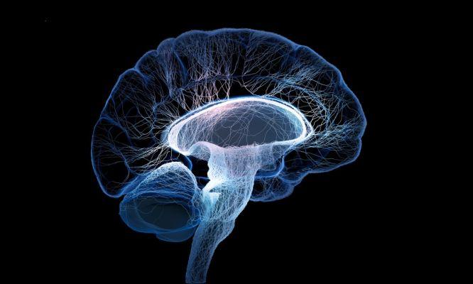Brain Plasticity Information Session