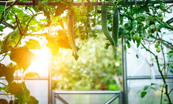 Solar in WA: Here comes the Sun