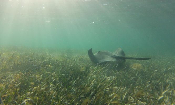 Seagrass paves the way for carbon-neutral Rotto