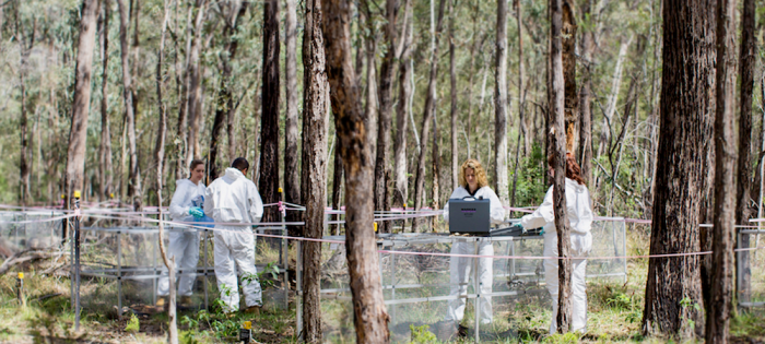 A day at a 'body farm'
