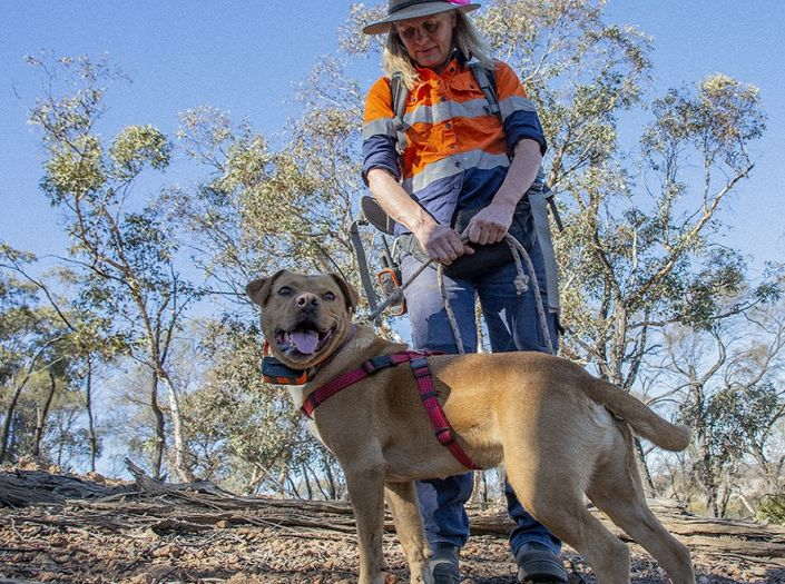 Dogs with jobs join cat fight