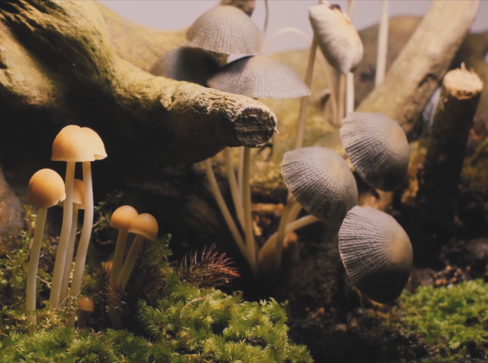 Mushroom leather could be the key to sustainable fashion