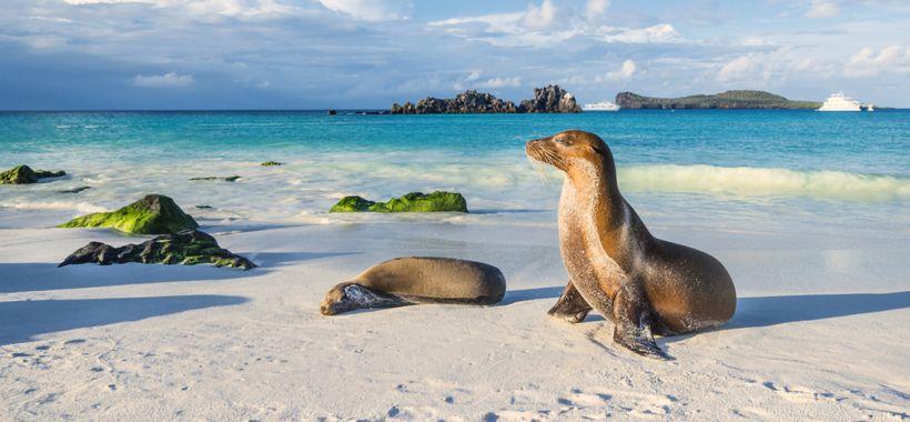 The secret life of island animals