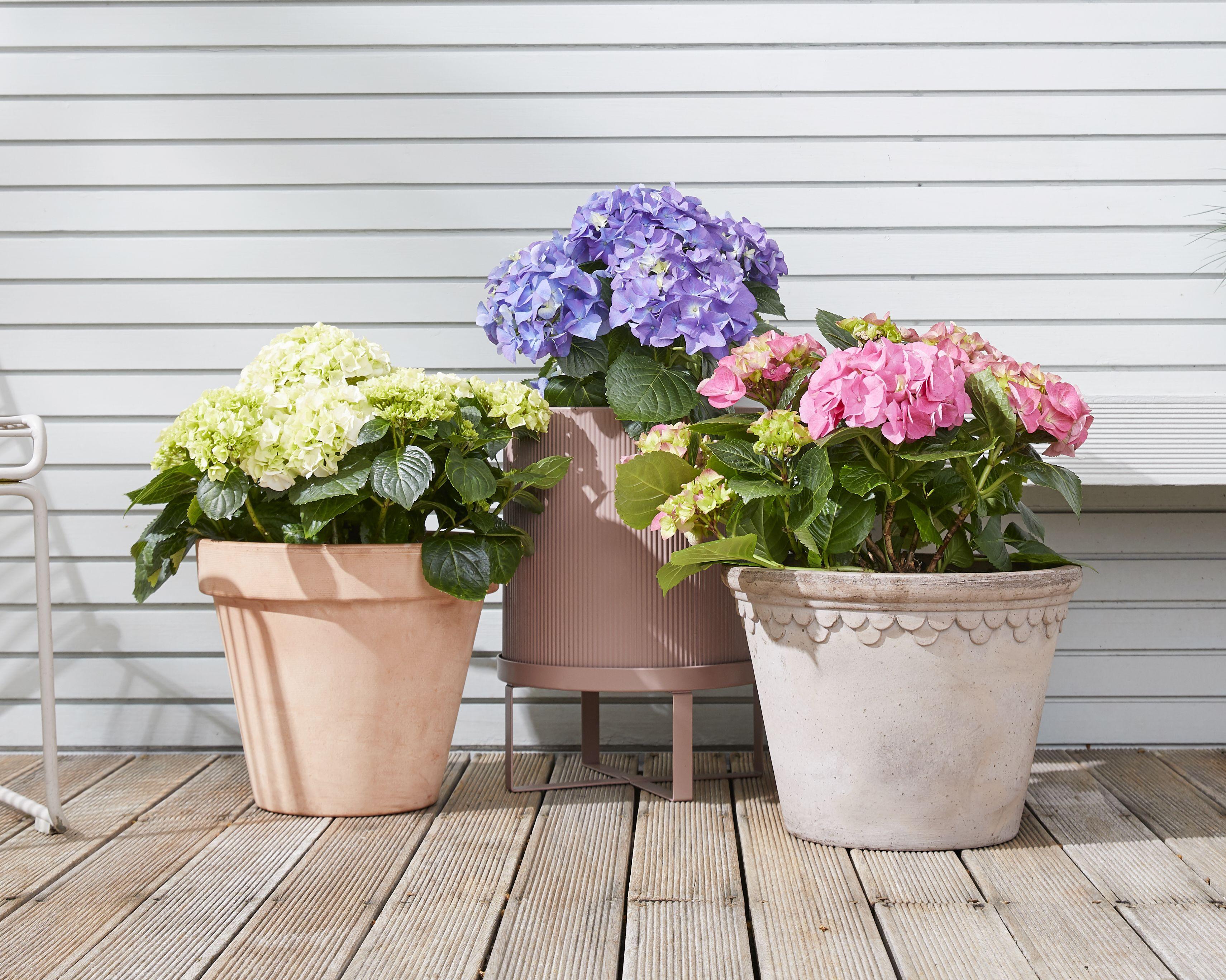 10 Best Outdoor Plants
