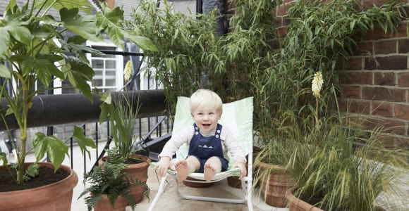 Buy child and pet-safe plants online