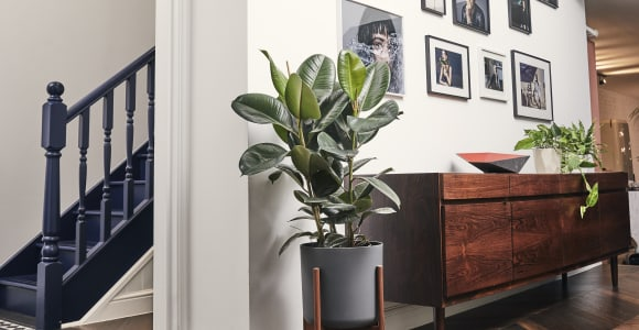 The best air-purifying plants for you