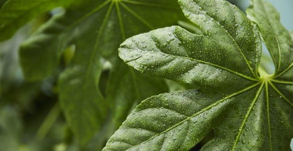 Buy these beginner's outdoor plants
