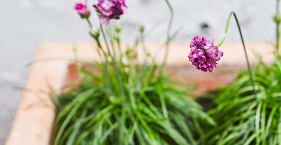 Buy these 10 best outdoor plants