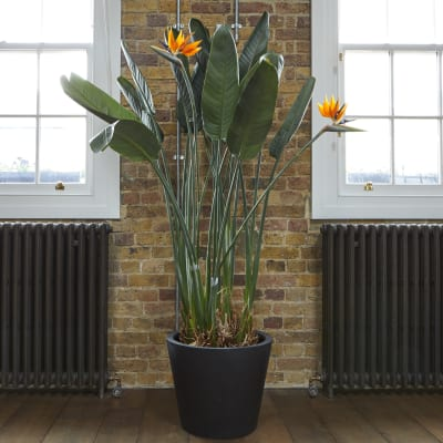 Buy indoor house plants online | Patch