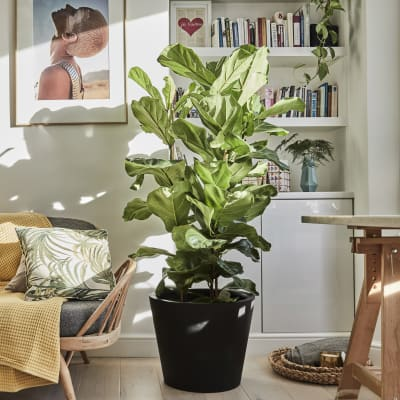 Buy plants for the living room online | Patch