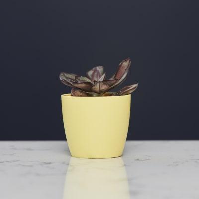 7cm wide curve-edged pot