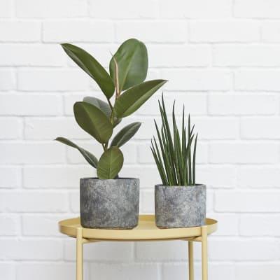 patch plants pots