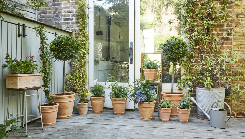 Ten Top Tips For Small Shady Urban Gardens: Top Tips On Planting Up Your Outdoor Plants