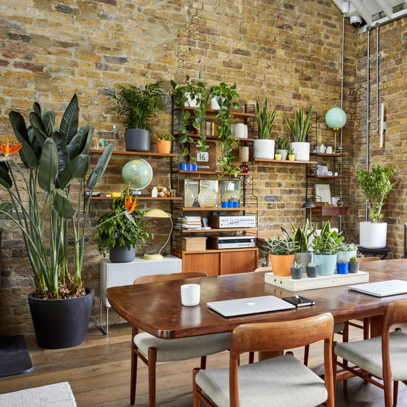 Plants for the Study and Home Office