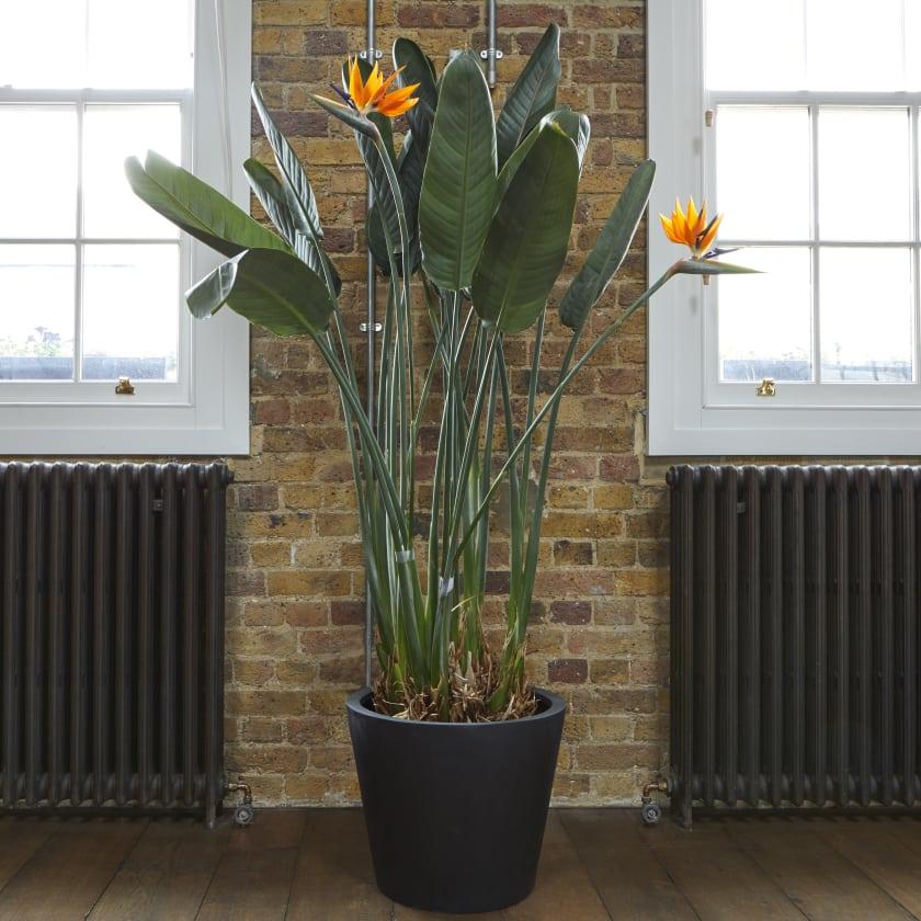 Buy indoor house plants online | Patch