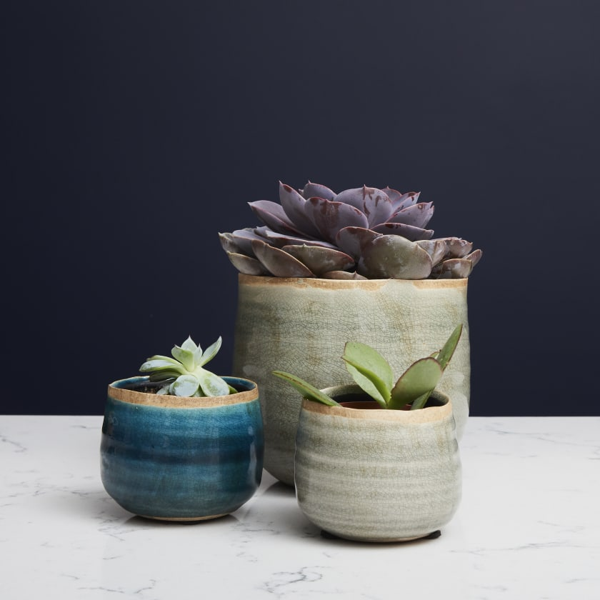 Large succulent plant in plant pot