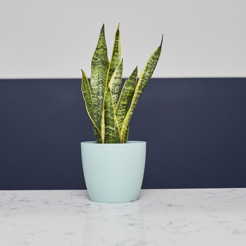 Mint Small platic plant pot