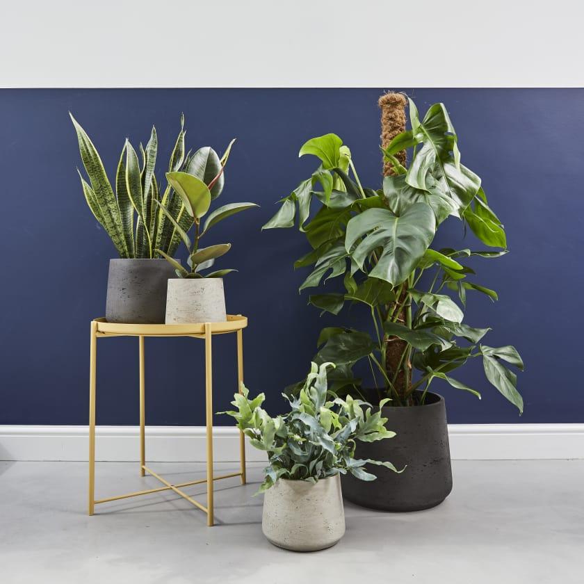 clay pots for indoor plants