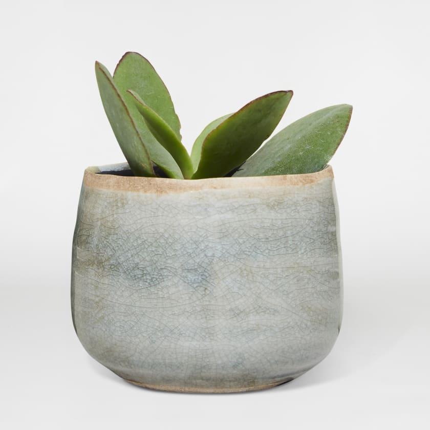Tiny Succulent