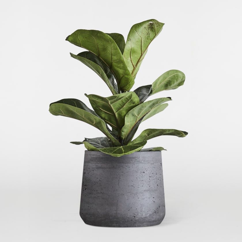 Charcoal Plant Pot