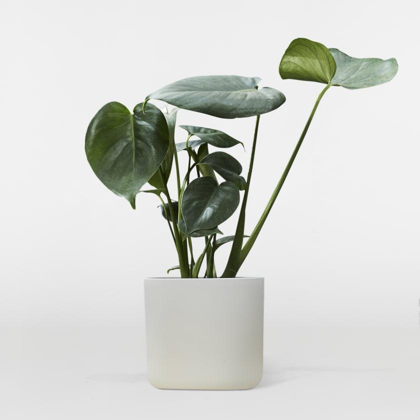 White 16cm Pot