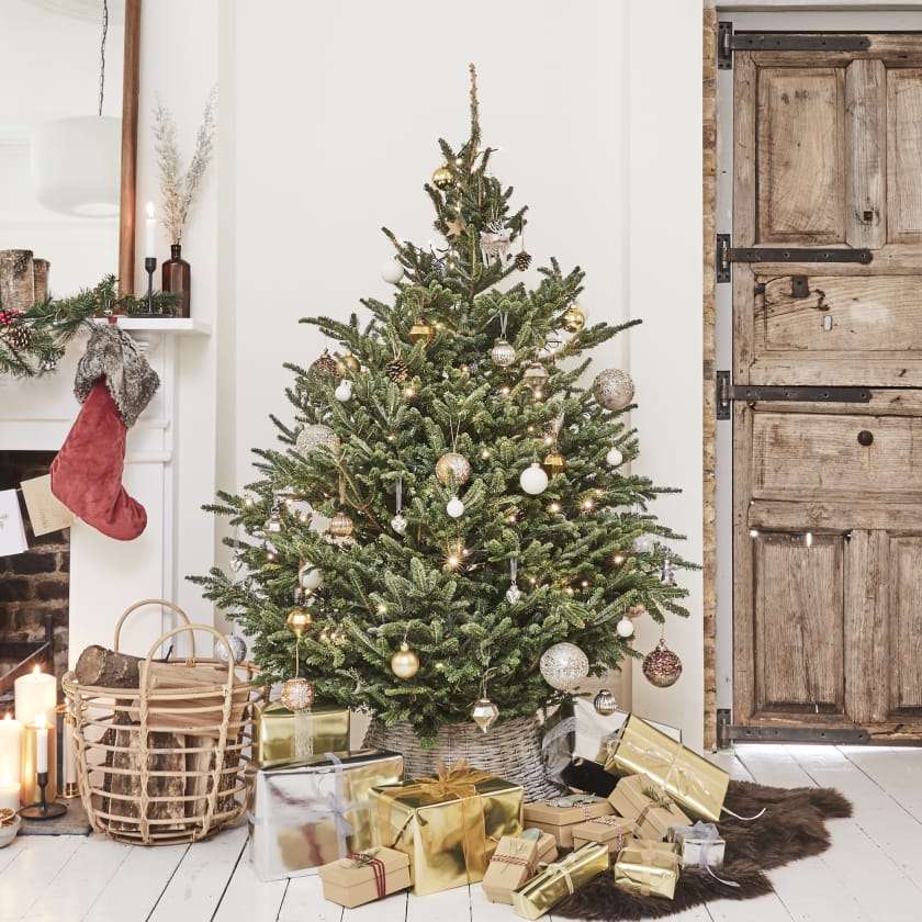 Christmas Tree Patch: Fraser Fir Christmas Tree — Christmas-trees