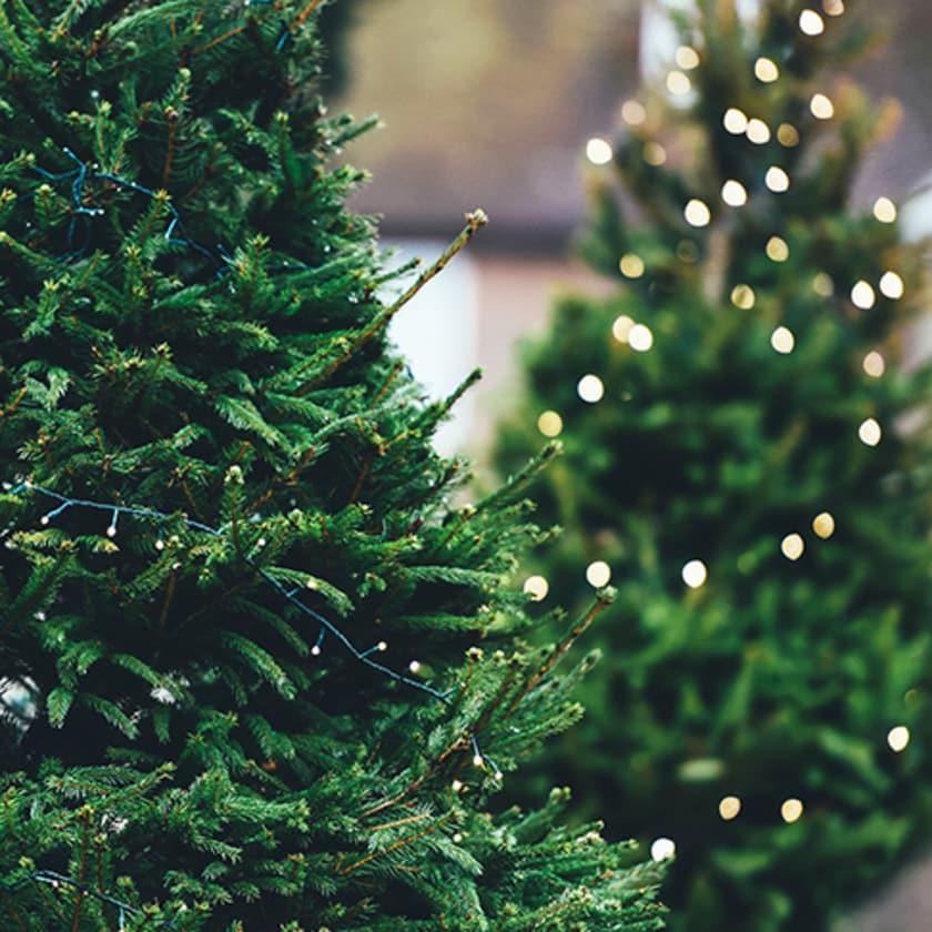 Warm Christmas Tree Lights