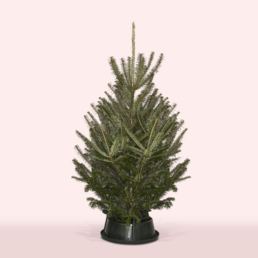 Christmas Tree 4-5ft Fraser Fir
