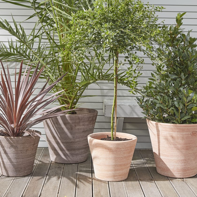 Plants for the Patio