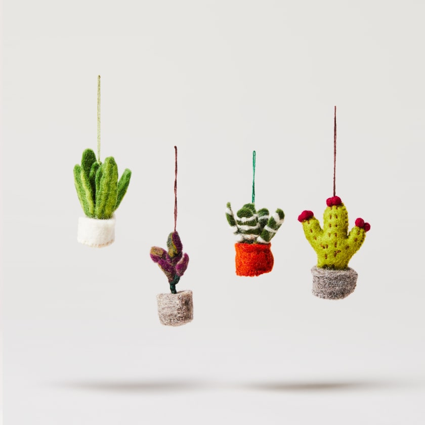 felt patch plants
