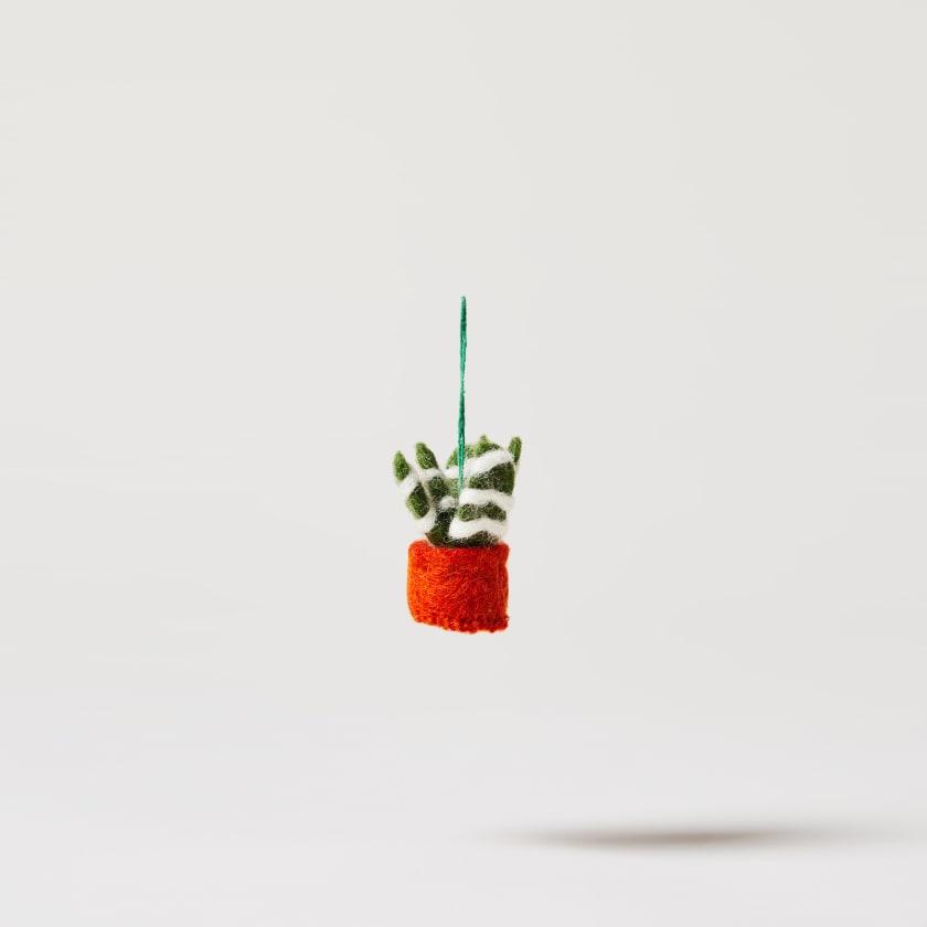 felt zebra plant