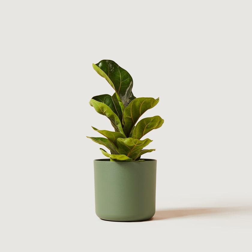 16cm green studio w/plant