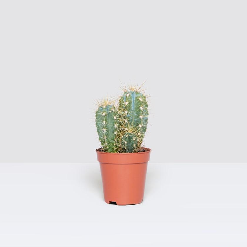 Bright Botanical Palm Leaf Mini Cactus Pot 6cm