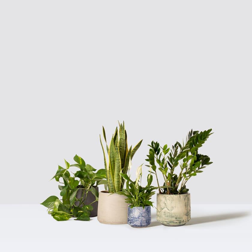 studio pots