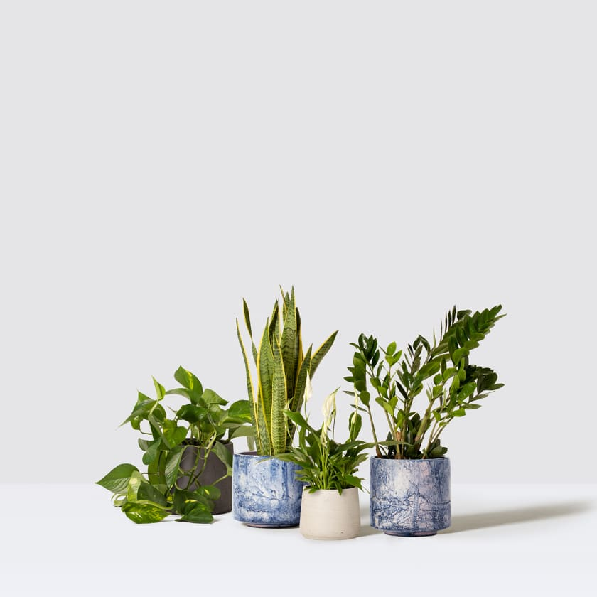 unkillable studio with pots