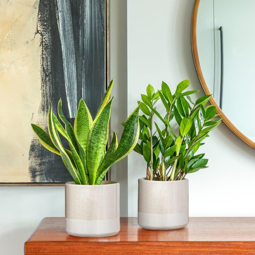 Easy watering set with pots in situ