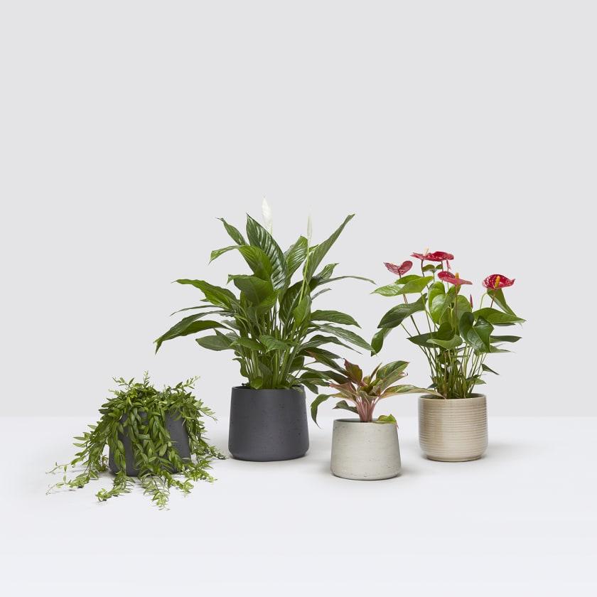 spring set studio with pots