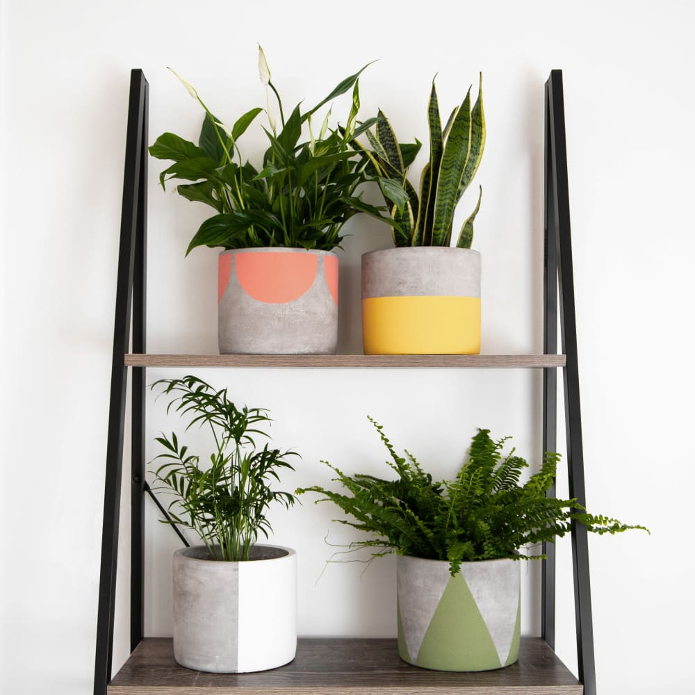 Everything you need to know about plant pots
