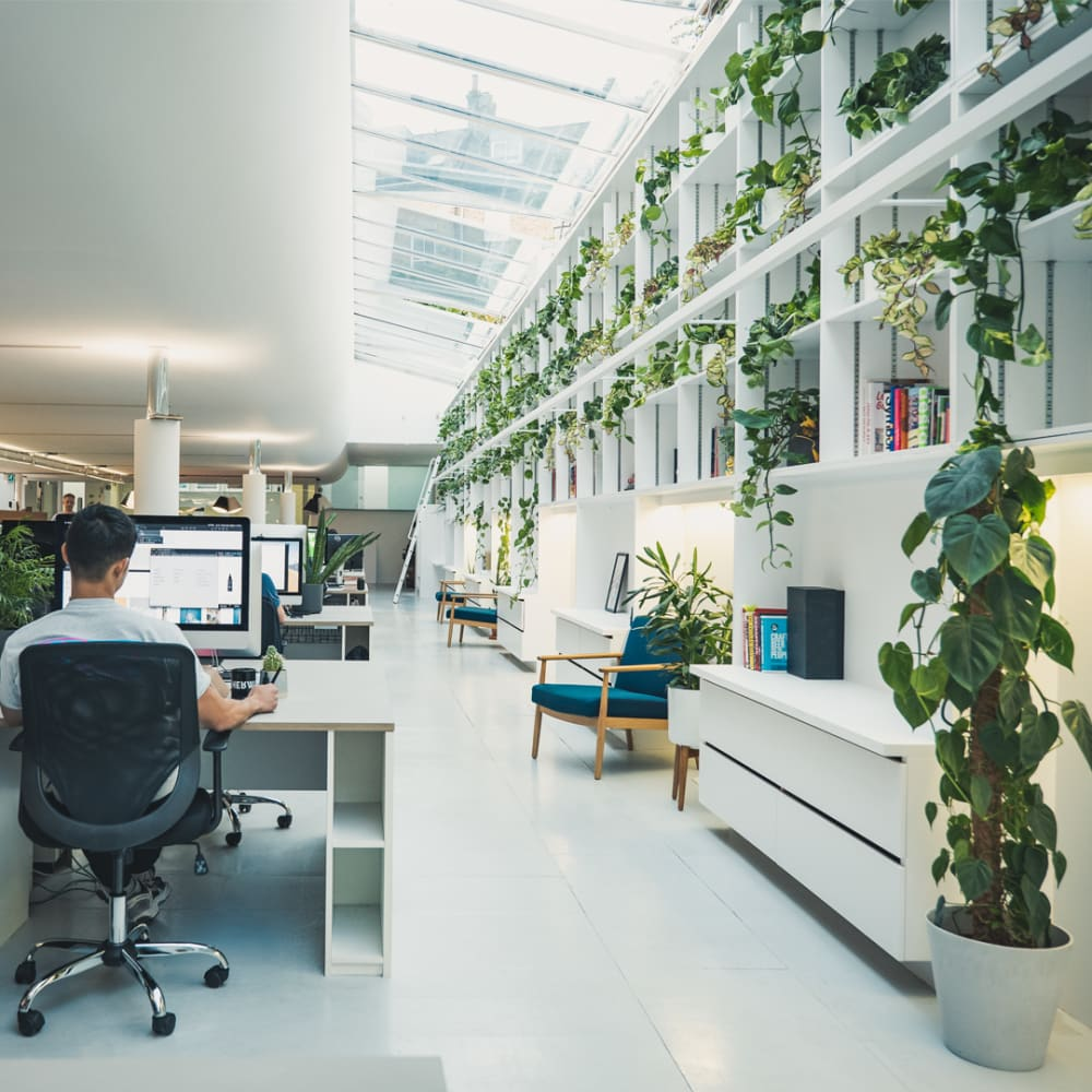 How to pick office plants
