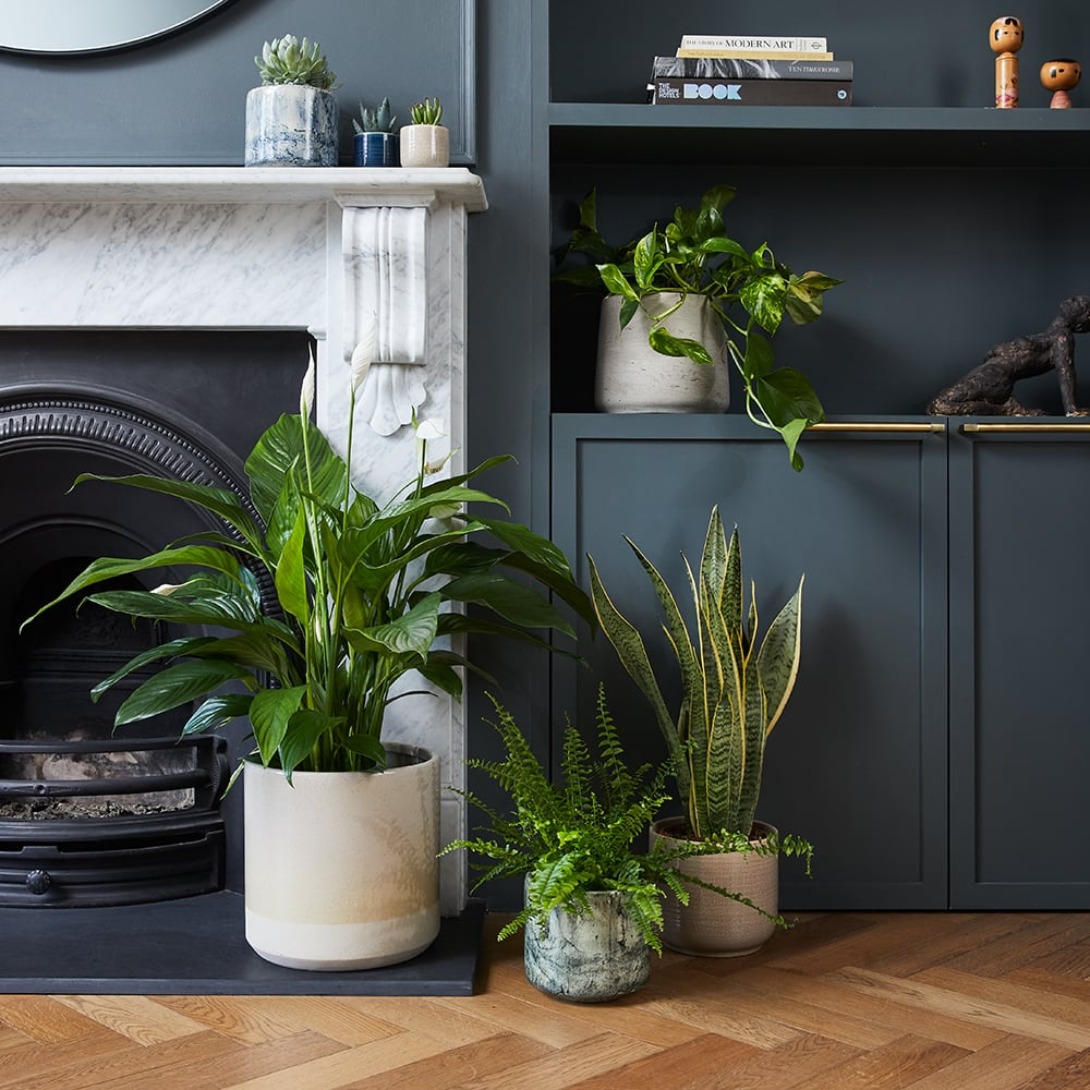 Decorating with plants is simple