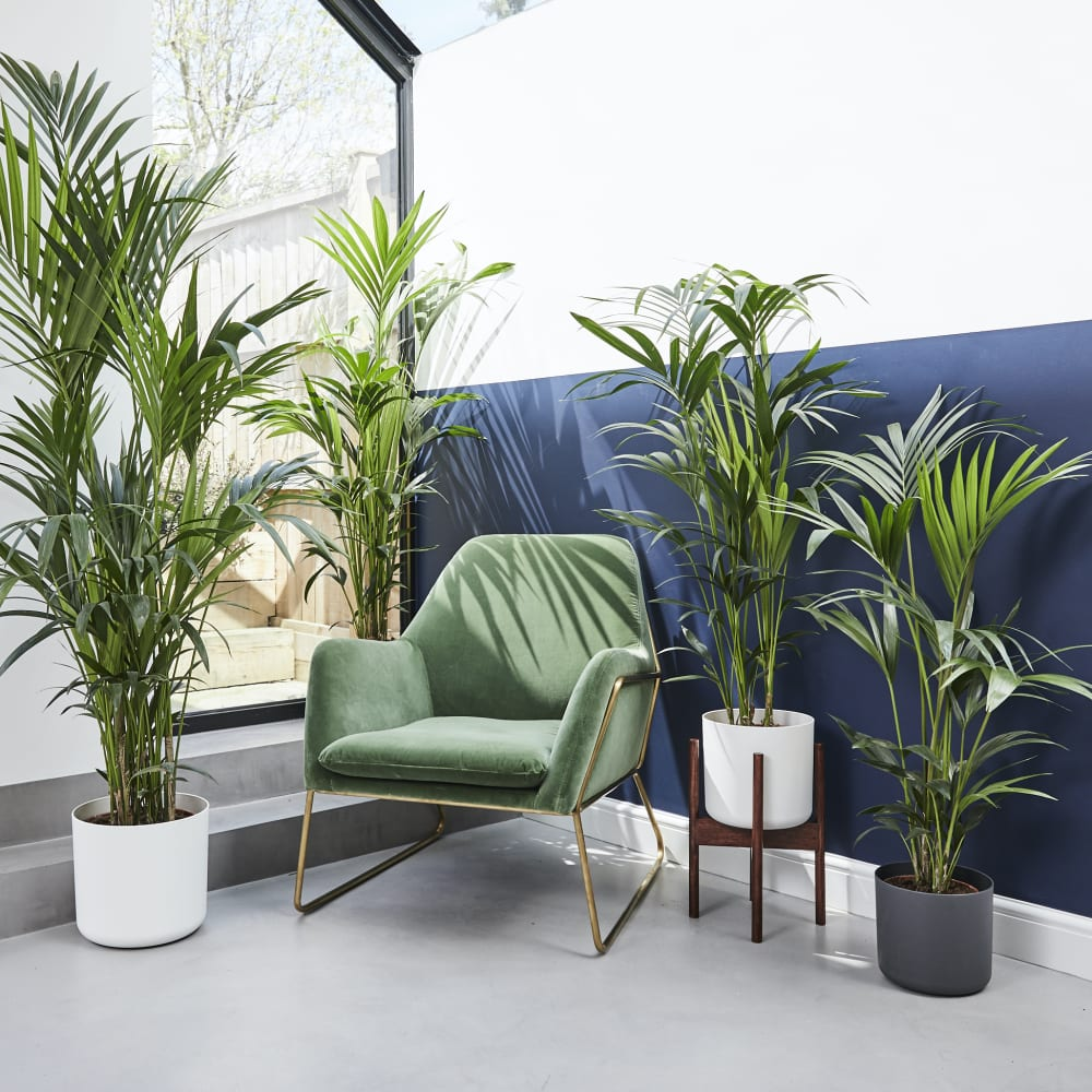Win £500 worth of plants from Patch!