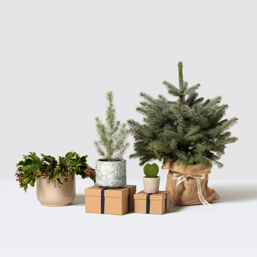 Decorate with plants this Christmas